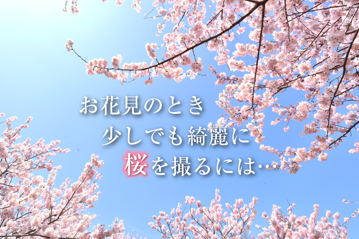 春はすぐそこ!お花見写真を少しでも綺麗に撮るには…?