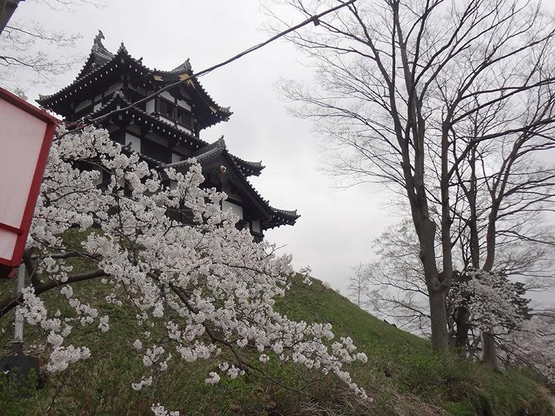 高田城を背景にした桜の写真
